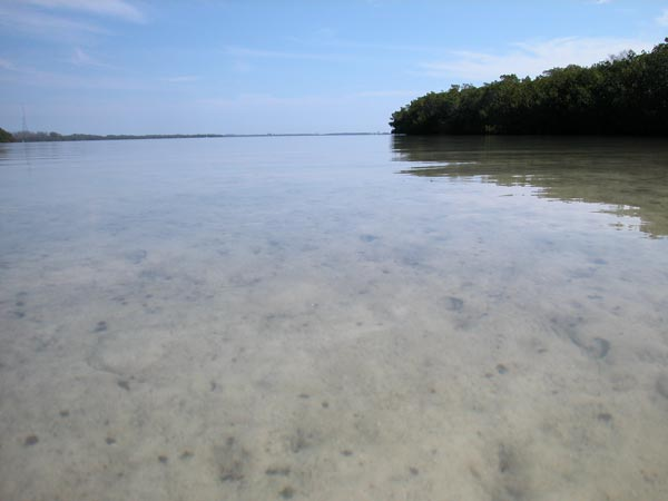 Shallow backwater mangrove flats at Fort Desoto Park