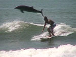 dolphin jumping near surfer