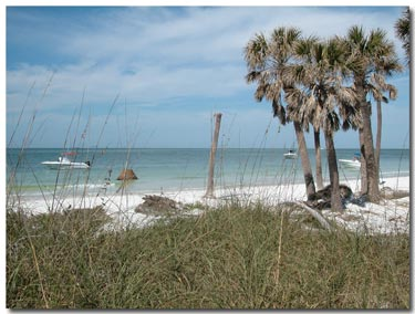 Egmont Key beach and palms.jpg