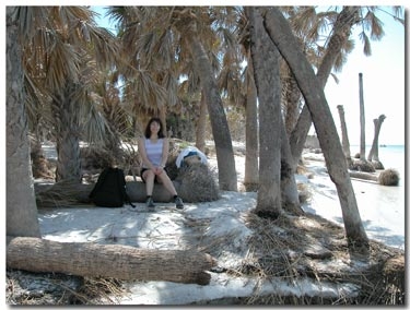 resting underneath the palms on Egmont Key.jpg