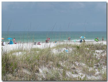 st pete beach sea oats and white sand beach.jpg